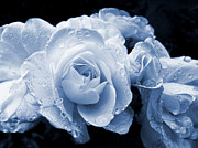 Monochromes Art - Blue Roses with Raindrops by Jennie Marie Schell