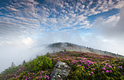 Western North Carolina Prints - Blue Skies Above Catawba Rhododendron in the Roan Mountain Highlands Print by Mark VanDyke
