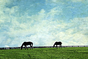 Grazing Horse Posters - Blue Skies and Blue Grass Poster by Darren Fisher