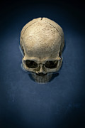 Cult Photos - Blue Skull by Edward Fielding