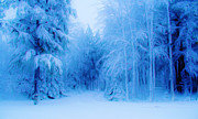 Winter Scene Digital Art Prints - Blue Snowy Night Print by Liz Evensen
