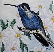 Sandra Maddox - Blue-throated...