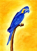 Macaw Pastels - Blue Throated Macaw Bird by Olde Time  Mercantile