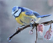 Donna Tuten - Blue Tit and Blossoms