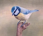 Rachel Stribbling - Blue Tit Painting