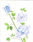 Trio Drawings Prints - Blue Trio of Roses Print by Dusty Reed