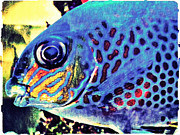 Fish Artwork - Blue Tropical Fish by Miss Dawn
