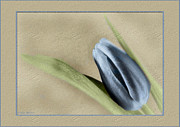 Featured Sculpture Prints - Blue Tulip Print by Philip  Butler