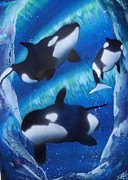 Killer B Posters - Blue under water orca Poster by Norman Seagrave