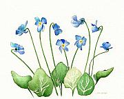 Nan Wright Prints - Blue Violets Print by Nan Wright