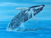 Save The Whales Framed Prints - Blue Whale Breaching Framed Print by Nigel Wakefield