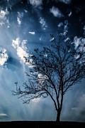 Karol  Livote - Blue Winds