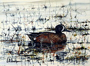 Bill Hudson - Blue-Winged Teal