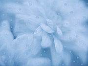 Snow Photo Prints - Blue Winter Fairy Tale Print by Irina Wardas