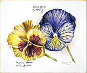 Inspire Drawings Metal Prints - Blue Yellow Pansies Metal Print by Katharina Filus