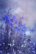 Monochrome Prints - Bluebell Heaven Print by Priska Wettstein