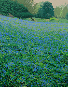 Malcolm Warrilow - Bluebell hill