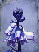 Lynn Bolt - Bluebell