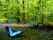Russ Murry - Bluebell Wood