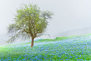 Pasture Scenes Prints - Bluebells Print by Debra and Dave Vanderlaan