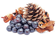 Christmas Card Photo Metal Prints - Blueberries Decoration Metal Print by Wim Lanclus