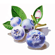 Art Studio Paintings - Blueberries by Irina Sztukowski