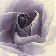 Blueberries N Cream Print by Darlene Kwiatkowski