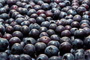 Blueberries Posters - Blueberry Galore Poster by Olivier Le Queinec