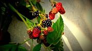 Susanne Van Hulst - Blueberry - Raspberry