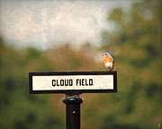 Bluebird Metal Prints - Bluebird at Cloud Field Metal Print by Jai Johnson