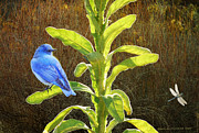 R christopher Vest - Bluebird Back Lit Mullein