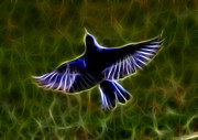 Tail Mixed Media - Bluebird In Flight by Shane Bechler