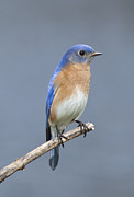 John Crothers - Bluebird