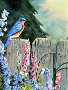 Bluebird Metal Prints - Bluebird Morning Metal Print by John W Walker