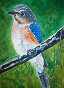 On A Branch Paintings - Bluebird on a Branch by Richard Goohs