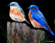 Bluebirds Framed Prints - Bluebird Pair Framed Print by Ellen Strope
