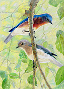 Green Day Drawings Originals - Bluebird Pair by Marilyn Smith