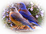 Jean Noren Metal Prints - Bluebird Wedding Metal Print by Jean Noren