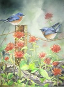 Bluebird Posters - Bluebirds and Indian paintbrush Poster by Patricia Pushaw