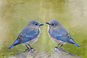 Bonnie Barry Art - Bluebirds of Happiness by Bonnie Barry