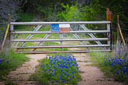 Lone Star Framed Prints - Bluebonnet Gate Framed Print by Inge Johnsson