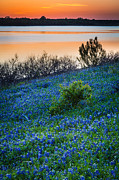 Inge Johnsson Framed Prints - Bluebonnet Shoreline Framed Print by Inge Johnsson
