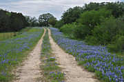 Lynn Bauer Photography Posters - Bluebonnet Trail Poster by Lynn Bauer