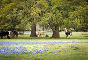 Debbie Karnes - Bluebonnets and Bovine