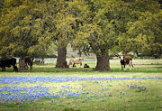 Debbie Karnes - Bluebonnets and Bovines