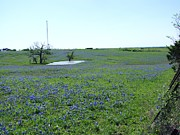 Gene Gregory - Bluebonnets6