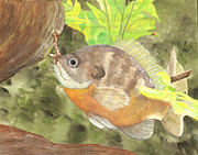 Mississippi River Scene Posters - Bluegill Poster by Catherine Basten