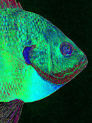 Schools Digital Art Metal Prints - Bluegill Fish p128 Metal Print by Wingsdomain Art and Photography