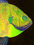 Schools Digital Art Metal Prints - Bluegill Fish p28 Metal Print by Wingsdomain Art and Photography