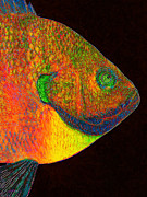 Schools Digital Art Metal Prints - Bluegill Fish Metal Print by Wingsdomain Art and Photography